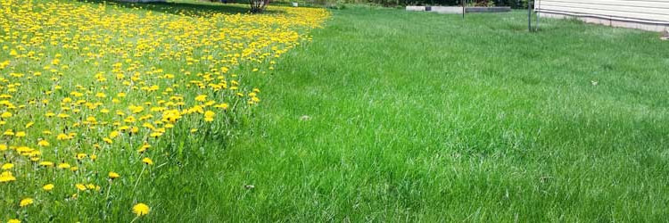Commercial Fertilizing and Weeding Colleyville, TX